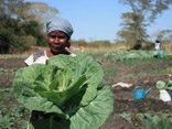 Produções agrícolas - projectos de segurança alimentar
