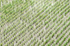 Oikos integra Coligação Cívica por maior sustentabilidade social e ambiental da Agricultura nacional