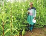 Negócios agrícolas sustentáveis para a redução da pobreza no Peru