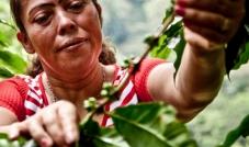 Parceria Oikos e Oxfam trazem chá, açúcar e chocolate de comércio justo. Encontre no Pingo Doce!