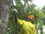 Conservação e Gestão participativa de florestas tropicais